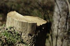 小树桩 免版税库存照片