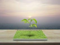 小树生长从一本开放书的,生态概念 图库摄影