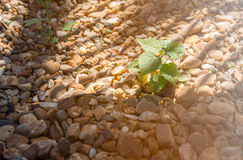 小树从岩石上升根据太阳 免版税库存图片