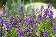 小桃红色和紫色花 免版税库存图片