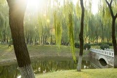 小桥梁和绿色树 图库摄影