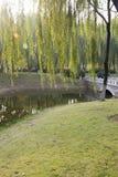 小桥梁和绿色树 免版税库存图片