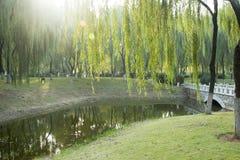 小桥梁和绿色树 免版税图库摄影