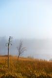 小桦树在有雾的秋天早晨 库存图片