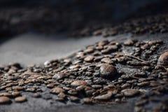 小棕色小卵石宏观看法在岩石的 免版税库存图片