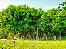 小森林在庭院看很美丽,并且是不可思议,很美丽的看的绿色和蓝天背景 库存照片