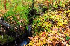 小森林小河 库存照片