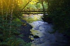 小森林桥梁 库存照片