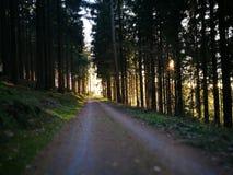 小森林的路径 库存照片