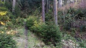 小森林道路 库存图片