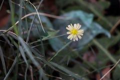 小植物和分支 库存照片