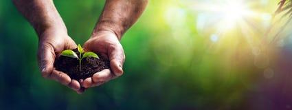 小植物在老手上-关心和保护概念 免版税库存照片