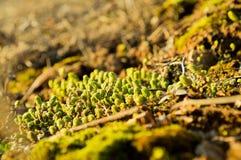 小植物在阳光下当春天曲调 免版税库存照片