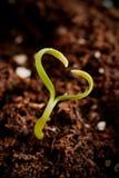 小植物概念 从自然的爱 免版税库存照片