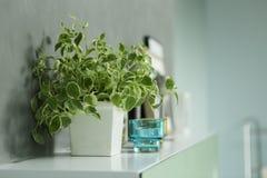 小植物罐在卫生间里 免版税库存图片