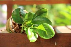 小植物 库存照片