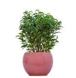 小植物 免版税库存照片