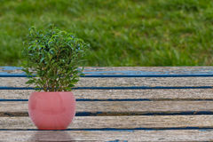 小植物 图库摄影