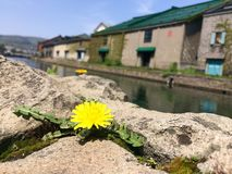 小樽运河视图 免版税库存照片