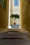 小橄榄树在一条狭窄的道路结束时 免版税库存照片