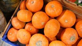 小橙色南瓜在杂货店 秋天在商店箱子的收获有机蔬菜 4K 股票视频