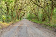 小橡树和寄生藤隧道在南方 免版税库存照片