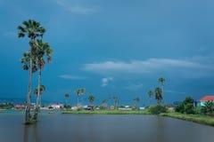 小池塘和生长的棕榈树  库存图片