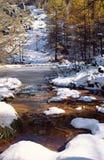 小池塘和落叶松属树在雪下,在开胃菜 库存照片