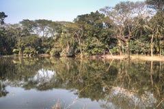 小池塘在Bagerhat,孟加拉国 库存图片