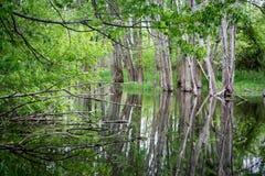 小池塘树 库存照片