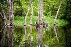 小池塘树 图库摄影
