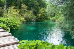 小池塘用鲜绿色水 图库摄影