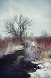 小河冬天 库存照片
