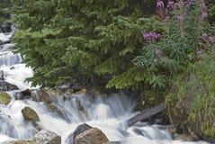 小河冷杉岩石结构树瀑布 库存图片