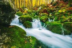 小河华美的场面在五颜六色的秋季森林里 免版税库存图片