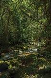 小河和岩石看法在一个森林中间在Visconde de MauA? ¡ 免版税库存照片