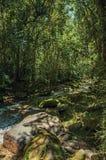 小河和岩石看法在一个森林中间在Visconde de MauA? ¡ 库存图片