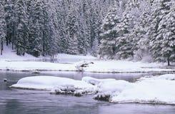 小河和杉树在雪,太浩湖,加利福尼亚 库存图片