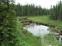 小河和森林在Wawa安大略加拿大附近 库存图片