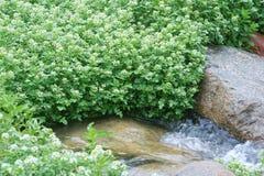 小河和植物 库存图片