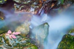 小河和瀑布 库存图片
