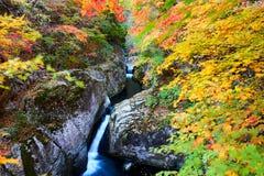 小河和秋天树风景 库存照片