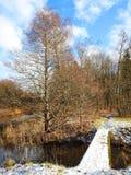 小河和道路在森林,立陶宛里 库存图片