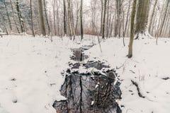 小河在一个森林里在冬天 免版税库存照片