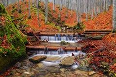 小河在公园在秋天 库存照片