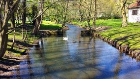 小河在公园 库存图片