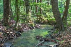 小河在喀尔巴阡山脉的一点的森林里 免版税库存图片