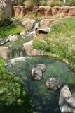 水小河在圣地亚哥野生生物公园 图库摄影