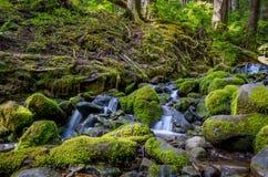小河在奥林匹克国家公园 免版税库存照片