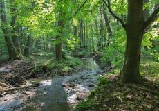 小河在小的喀尔巴阡山脉的小山森林里  库存照片